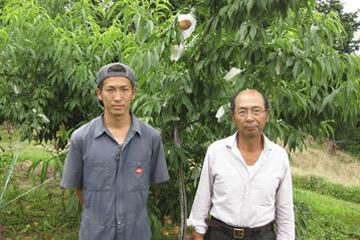 白桃の収獲始まる