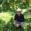 白桃の収穫は例年の1/3。