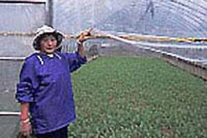 山菜摘みの季節です