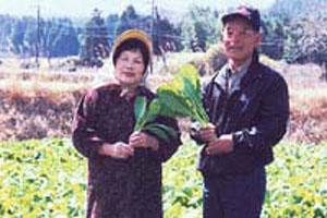 阿蘇の山焼きと高菜の収穫