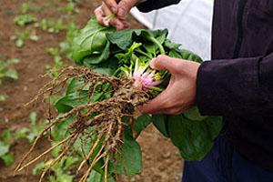 山の湧き水で野菜を栽培