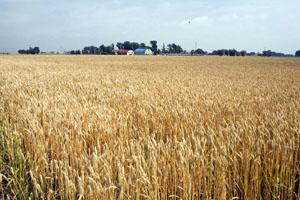 干ばつで畑がカラカラ