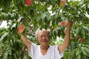 うちの桃は柔らかい