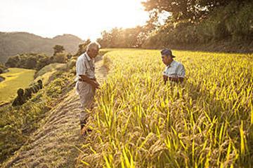 さあ、収穫だ! 豊穣を朗らかに祝う生産者たち