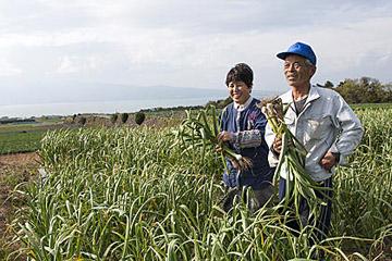 絶景農園でにんにく栽培。 親子で取り組む安心安全農業