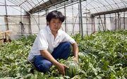 たくましさを増す若い生産者とすいか栽培