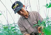 熟畑トマトのジュースが旨い / 北海道余市郡・中野ファームを訪ねて
