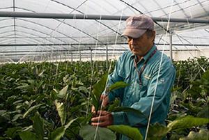 さわやかな香り、つややかな色。熊本長なすは冬が旨い / 熊本県玉名市・田畑農園を訪ねる