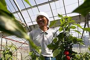 季節の先陣を切る沖縄野菜。 ミニパプリカの生産者を訪ねる