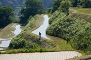 深化する農法 自然と向き合う吉川の米作り
