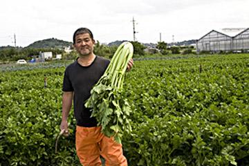 風の島 沖縄に適地あり 健菜セロリは冬が旬