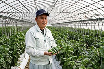 姿ふっくら、良い香り。 作り手の人柄あふれる沖縄ピーマン。