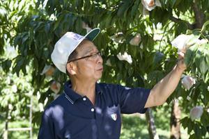 赤みさす果肉の絶品白桃 / 長野県飯田市・原農園を訪ねる