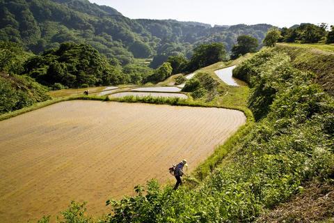 棚田の草刈り