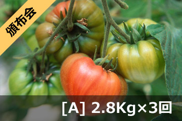 健菜ファーストトマト (3回頒布会 Aコース)