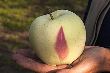 《2月》金星りんご