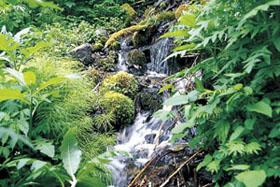 尾神岳の湧水が棚田を潤す