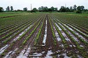 雨の合間をぬっての農作業