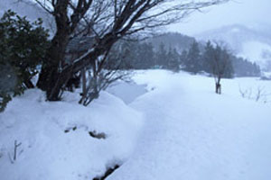 数年ぶりの大雪です
