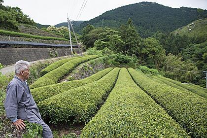 健菜日本茶手帖 / 「玉緑茶」おいしさのひみつ
