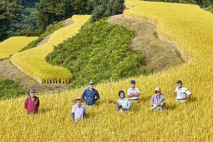 収穫の時を待つ 健菜米の生産者を訪ねて