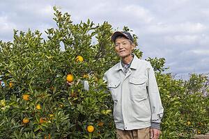 浜名湖北岸生まれの和製オレンジ。 その美味で果実好きを魅了中。