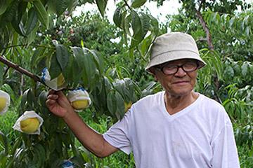 三者三様、絶品桃がそろいぶみ / 山梨・長野、3人の桃生産者を訪ねて