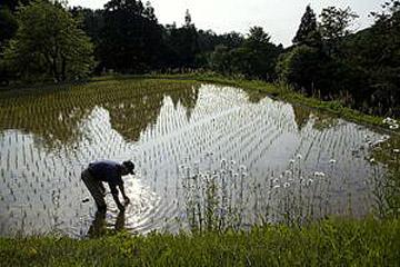 目指すは、自然の一部となる農業。 稔るのは、からだが欲する健やかさ / 新潟県吉川町・健菜米栽培農家を訪ねて