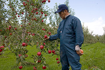 「品種らしさ」が光る! 果物王国の名人果実 / 北海道余市郡・安芸農園を訪ねる