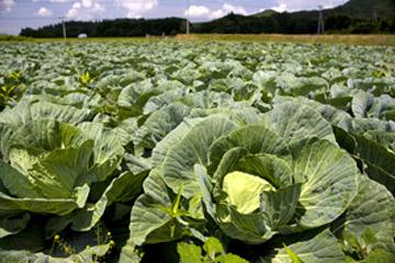 夏の美味野菜は涼やかな高原から