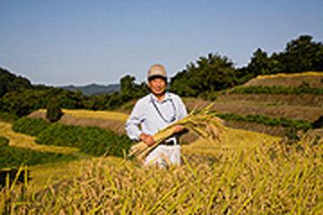 収穫直前の産地レポート 「健菜米コシヒカリ」