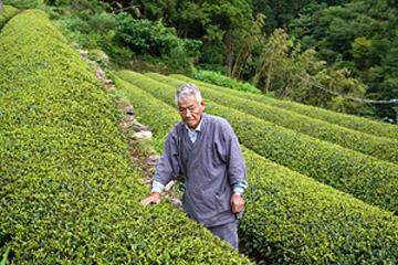 真っ直ぐな姿勢と革新の心 / 太田茶園のお茶づくり