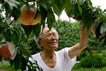 自然と会話する 果樹翁の桃&ぶどう栽培