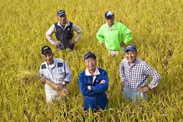 収穫の季を迎えた健菜米。 稲の力を引き出す生産者たち