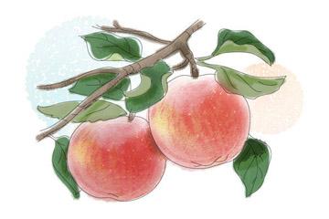 りんごの食べ頃