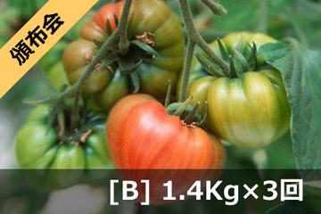 健菜ファーストトマト (3回頒布会 Bコース)